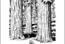 activities for Sequoia Book