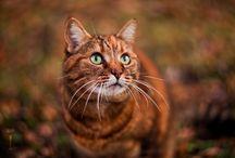 Pets / by Jenny Duke
