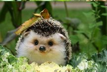 Hedgehogs.  ..
