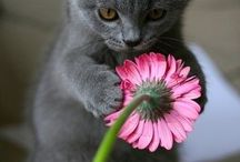 Soft kitty, warm kitty, little ball of fur...