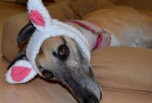 Pet- Crocheted Rabbit Ears for Halloween / Looking for a simple costume for Halloween?  Disguise your dog or cat in these cute, hand crocheted rabbit ears!  The headband style design stretches to fit head circumferences of (Small) 9-12 inches or (Large) 13 – 16 inches. White headband with pink inner ear. Hand wash and air dry. www.duds4buds.com