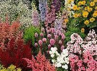 Tardos kert