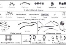 mictobiology / www.microbiologyinfo.com
