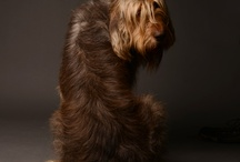 Must Love Dogs  / I Love Dogs Especially Airedales and Otterhounds!  / by Green Door Grocer and Gardens Owner