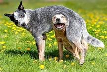 Animais são pura alegria e inocência.