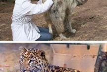 vlčíci a gepardíci
