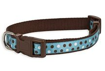 Buy Aspen Pet Products Petmate Adjustable Collar / #Aspen_Pet_Products Pet mate Adjustable Collar is a high quality nylon harnesses Collars & Leashes From #4petneeds. Order now https://www.4petneeds.com/url/p8ys