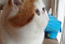 CATS / by Karilyn Sisko