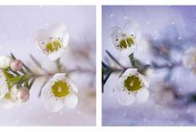 Poetic flower photography