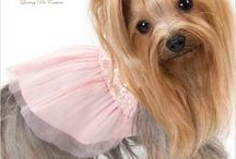 Dog Fashion / by GW Little Small Dog Catalog