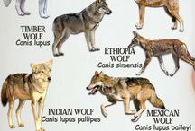 Animal info