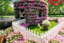 Teddy & Aura's Garden