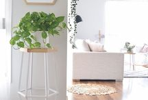 Plants for dining room