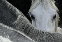 Horses / Beautiful and graceful creatures