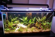 Aquarium Ideas / by Kyrie Estes