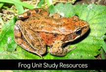 Frog unit study / by Chelle (Having Fun at Chelle's House)