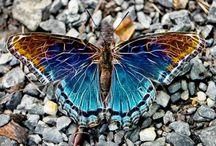 Butterfly  / by Vesna Kraus