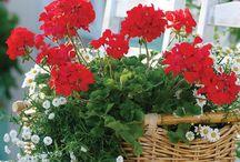 Kertészkedjünk / Garden, kert, kertészkedjünk együtt, ötletek és tippek a kerthez