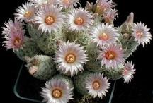 Flores de Cactus y Suculentas. / by Ma Virginia Cuartas R