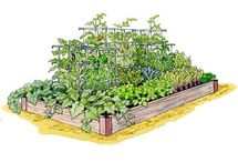 Ogród warzywny 2018