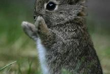 Sweet Little Critters