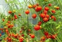 Для сада-огорода