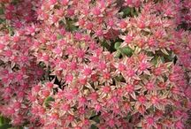 NEW for 2018 - Shrubs, Perennials, Annuals / Introduction to new 2018 Shrubs, Perennials and Annuals available on-line and in store at Garden Crossings LLC