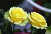 ( 27 )    ☆  花 ・ Flower  ☆