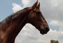 MY STUFF / MY PHOTO'S, MY HORSES, MINE... ;)