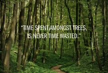 Tree Quotes and Inspiration / Be inspired by the life and beauty trees give!