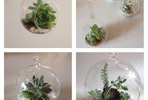 Succulents / Giftware- mini terrariums