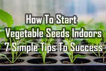 Start Seeds