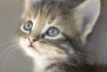 Meow ^ ^