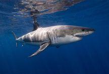 Haaien en zeezoogdieren