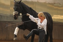 In Hand Haute Ecole Liberty / Working with horse a from the ground