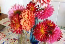 Dahlias / by Cactus Flower Florists