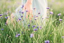 feminilidade / a delicadeza feminina é tão singela e leve como a pétala de uma rosa.