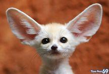 So cute I could die(: / by Anna Joy Myrick