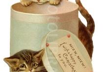 vintage postcard kočky