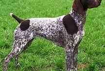 Hunting Dog Breeds / Hunting Dog Breeds