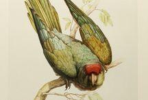 birdart