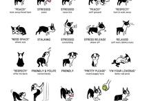 Doggie Bella Grace / by Joanna Brandow