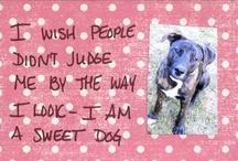 The Pet Postcard Project Pinterest Board