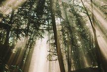 If I were a tree...