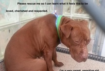adopt or rescue / by delia lorenzo