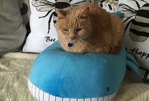 Ronald / My cat
