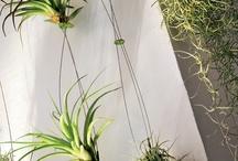 piante e balconi / composizioni di piante da interni e da esterni