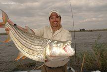 Tafika and Shamashanga Fishing Lodges in Zimbabwe / Tiger fishing in Zimbabwe at its best! See our website to book: www.zimbabwebookers.com