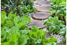 voedselplanten