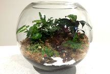 My Terrarium Creations / Terrariums my hubby and I have created